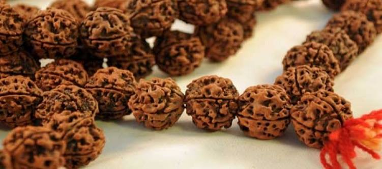 rudraksha in hindi